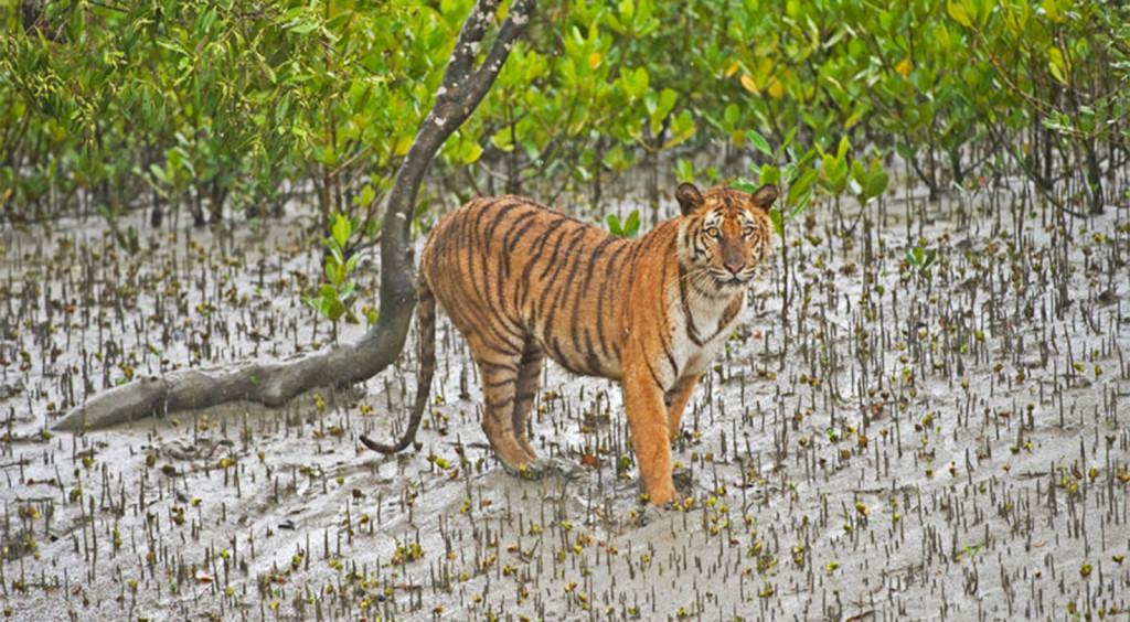 sunderbans - bangladesh