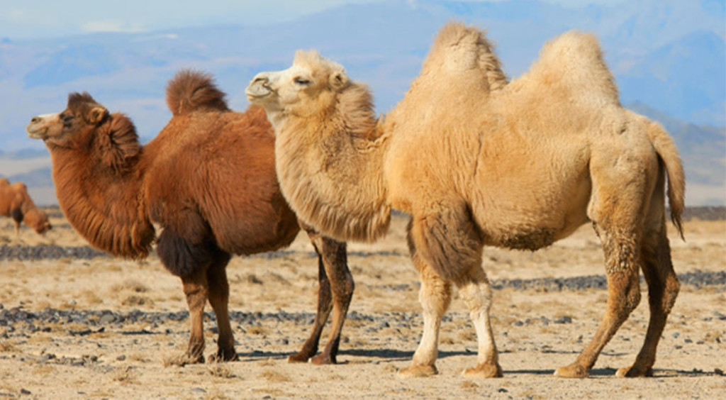 viajes ladakh 4