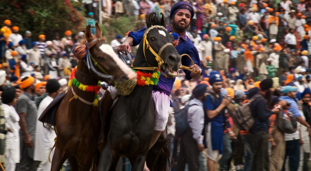 Punjab Hola Mohalla horse