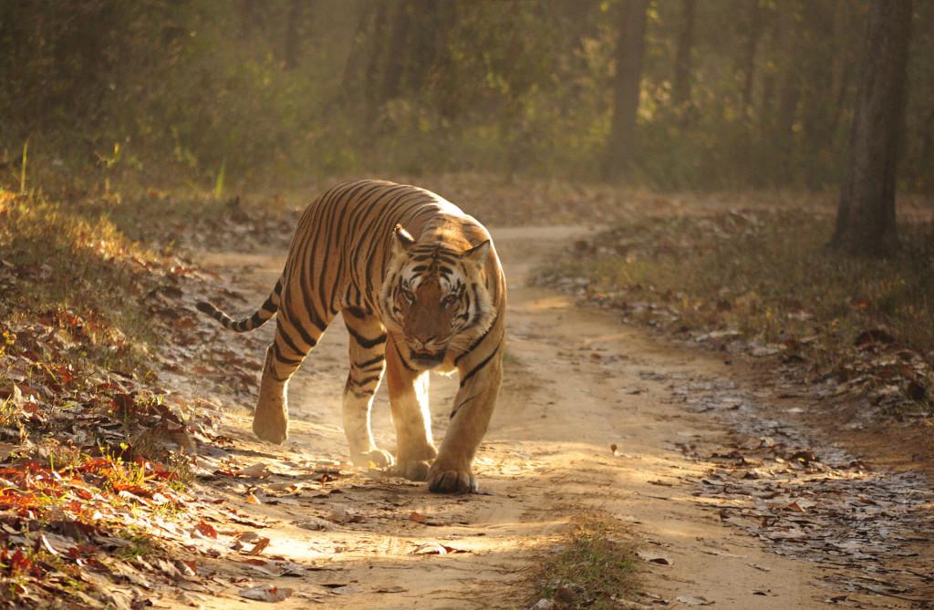 India Central -Madhya Pradesh - PN Kanha